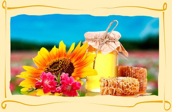 Окраска мёда зависит от растений